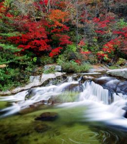 Depiction of Odaesan_National_Park